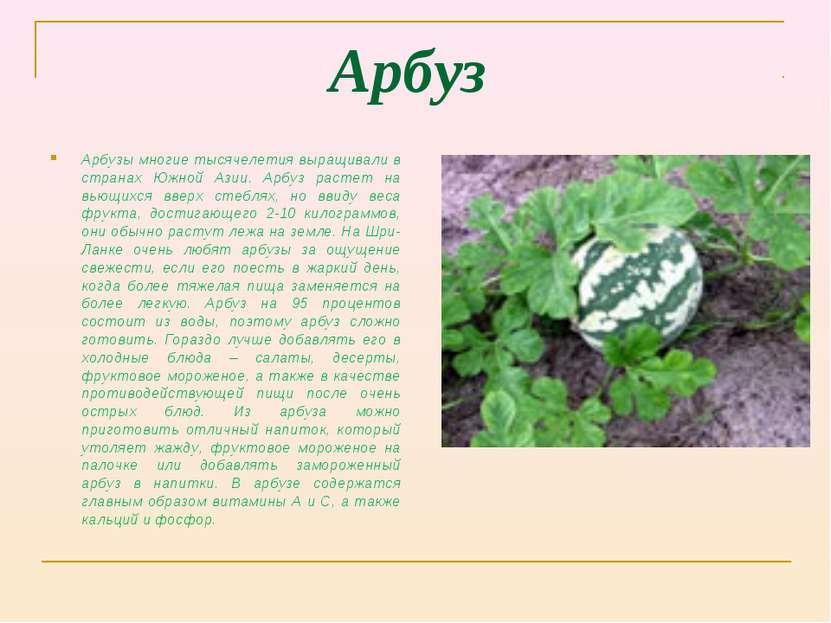 Арбуз Арбузы многие тысячелетия выращивали в странах Южной Азии. Арбуз растет...