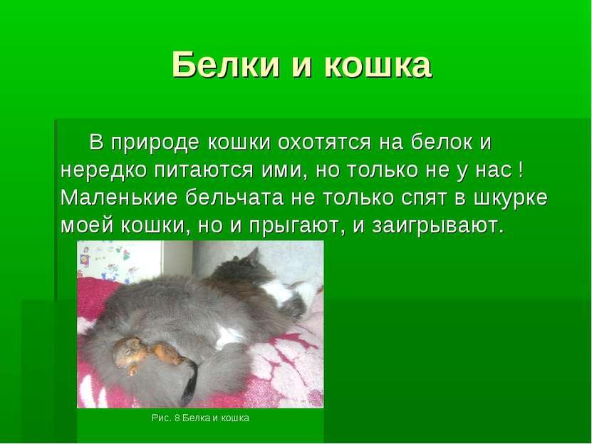 Белки и кошка В природе кошки охотятся на белок и нередко питаются ими, но то...