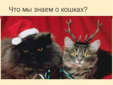 Что мы знаем о кошках? Сколько лет живут кошки? От 12 до 20 лет Сколько весят...