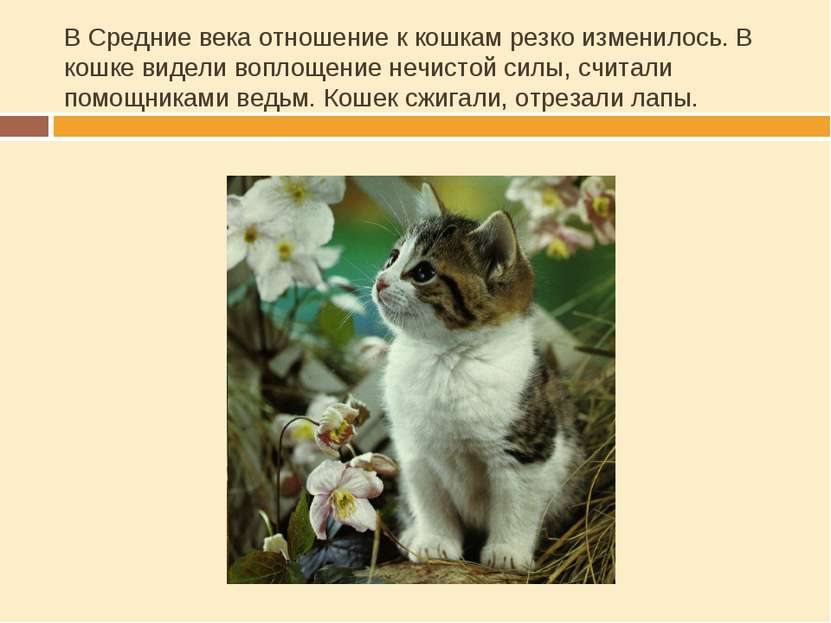 В Средние века отношение к кошкам резко изменилось. В кошке видели воплощение...