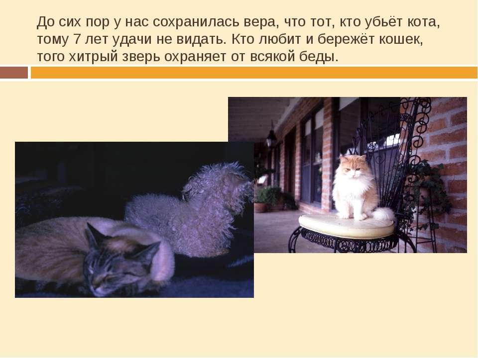 До сих пор у нас сохранилась вера, что тот, кто убьёт кота, тому 7 лет удачи ...