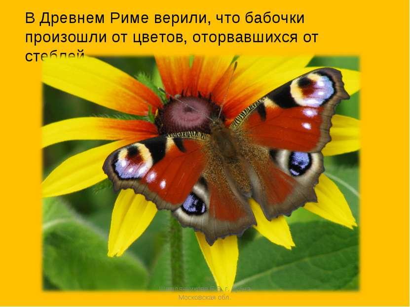 В Древнем Риме верили, что бабочки произошли от цветов, оторвавшихся от стебл...