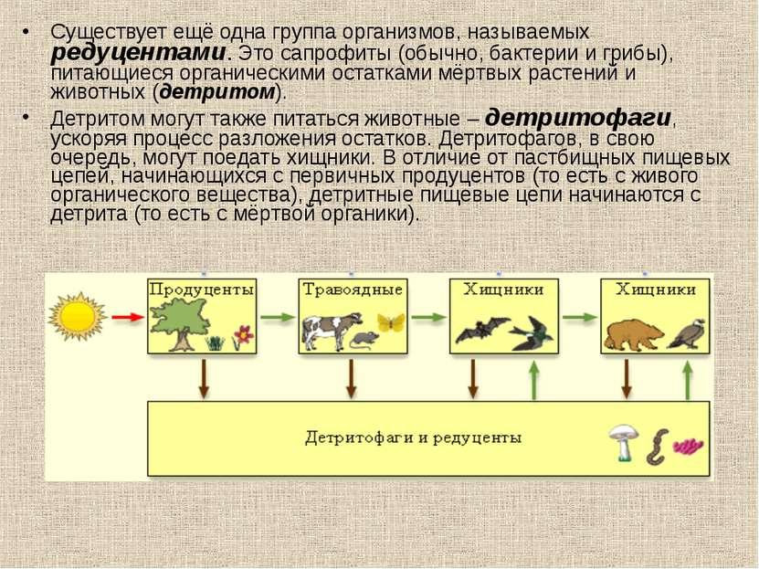 Существует ещё одна группа организмов, называемых редуцентами. Это сапрофиты ...
