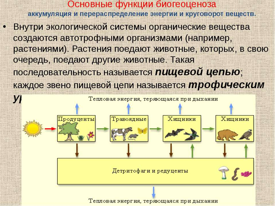 Основные функции биогеоценоза аккумуляция и перераспределение энергии и круго...