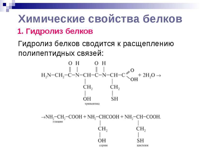Химические свойства белков 1. Гидролиз белков Гидролиз белков сводится к расщ...
