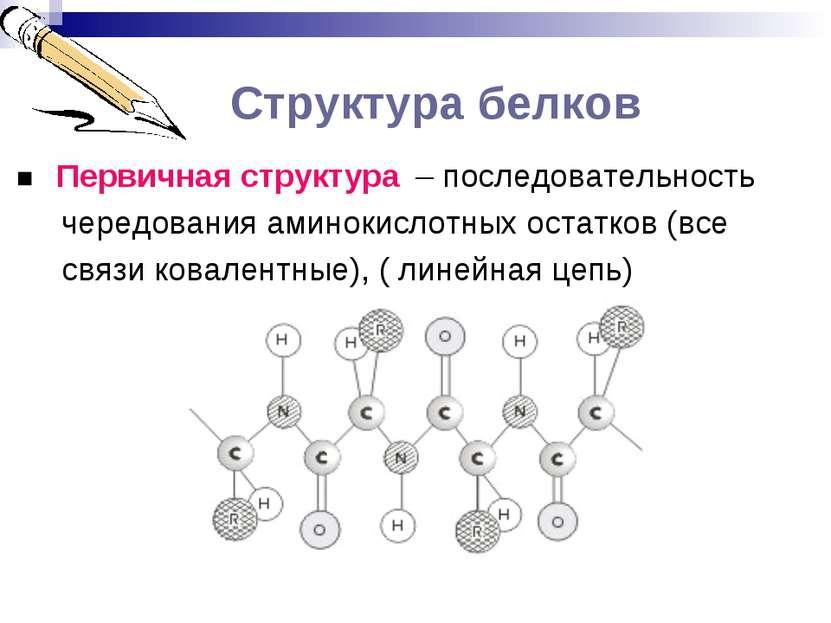 Структура белков ■ Первичная структура – последовательность чередования амино...