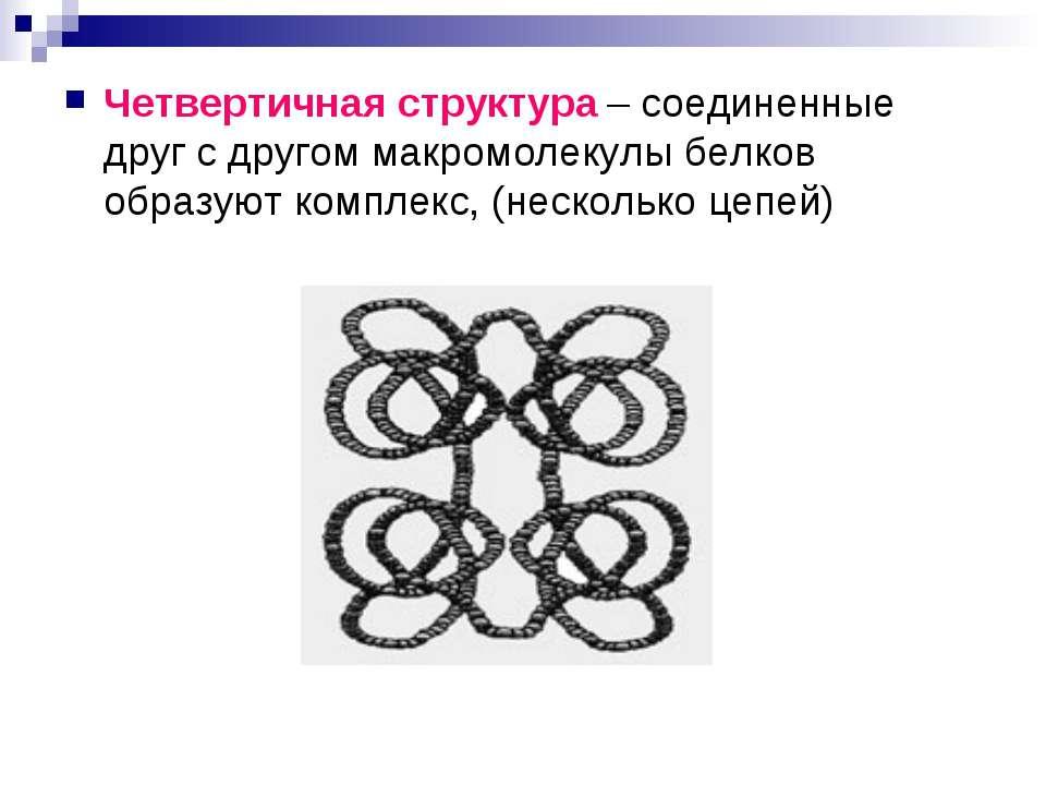 Четвертичная структура – соединенные друг с другом макромолекулы белков образ...