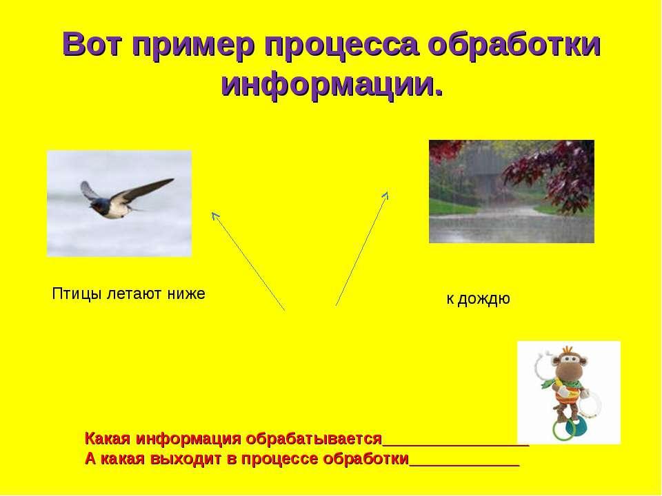 Вот пример процесса обработки информации. Птицы летают ниже к дождю Какая инф...