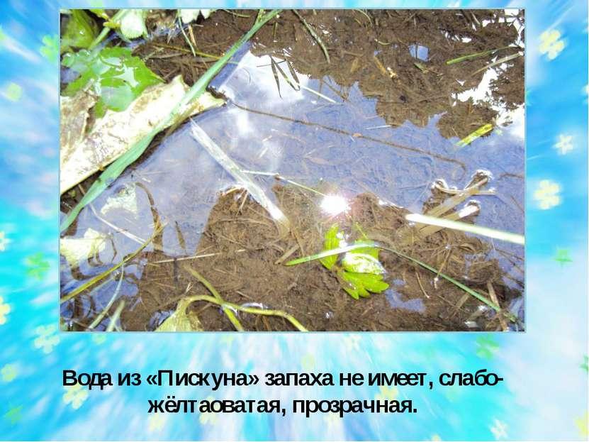 Вода из «Пискуна» запаха не имеет, слабо-жёлтаоватая, прозрачная.