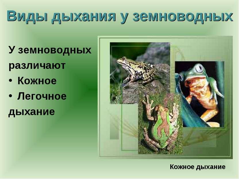 Виды дыхания у земноводных У земноводных различают Кожное Легочное дыхание Ко...