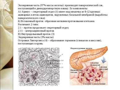 Экзокринная часть (97% массы железы): производит панкреатический сок, поступа...