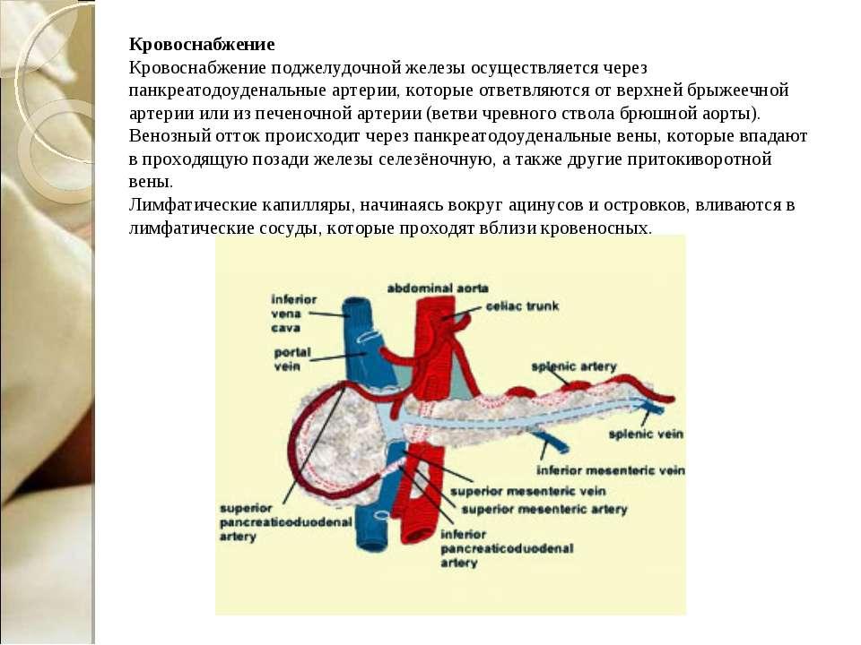 Кровоснабжение Кровоснабжение поджелудочной железы осуществляется через панкр...