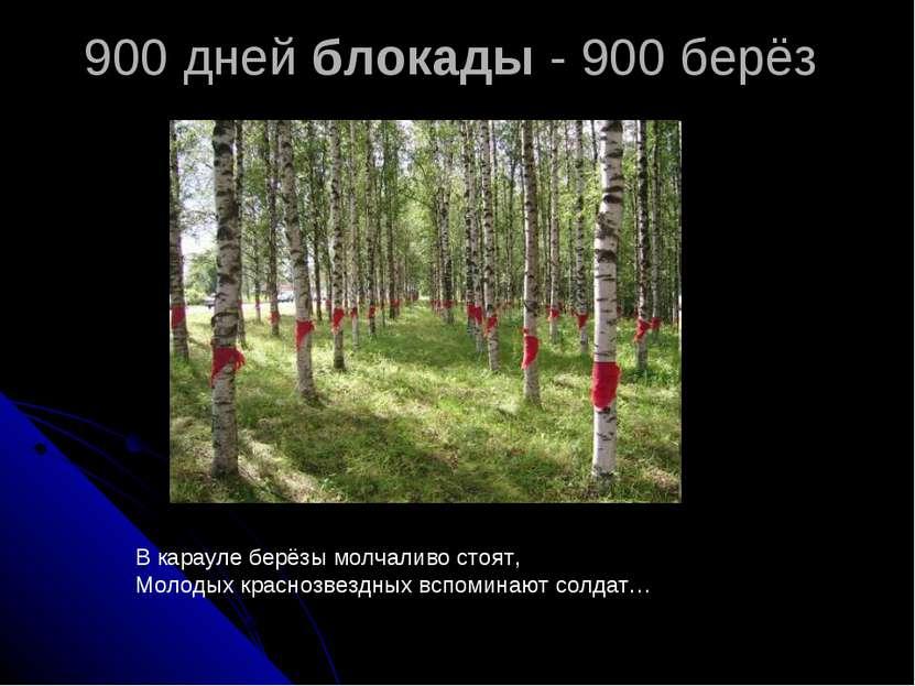 900 дней блокады - 900 берёз В карауле берёзы молчаливо стоят, Молодых красно...