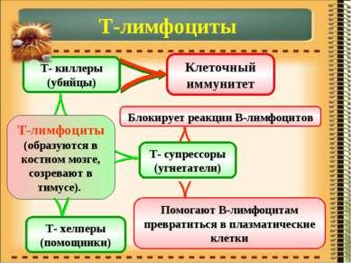 Т-лимфоциты Т-лимфоциты (образуются в костном мозге, созревают в тимусе). Т- ...