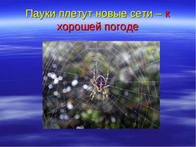 Пауки плетут новые сети – к хорошей погоде