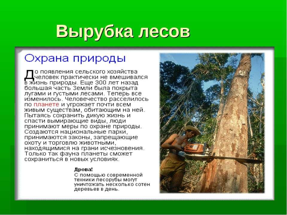 Вырубка лесов