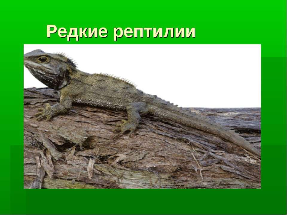 Редкие рептилии
