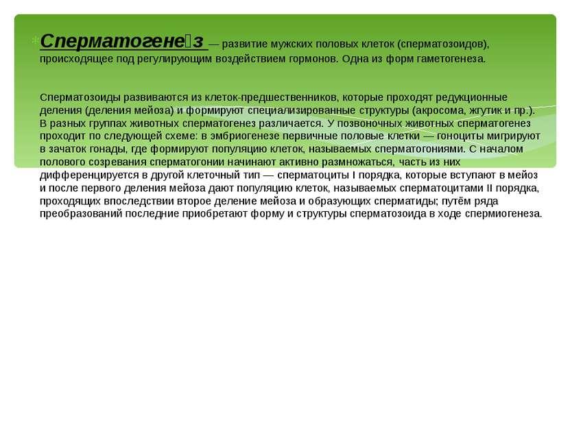Сперматогене з — развитие мужских половых клеток (сперматозоидов), происходящ...