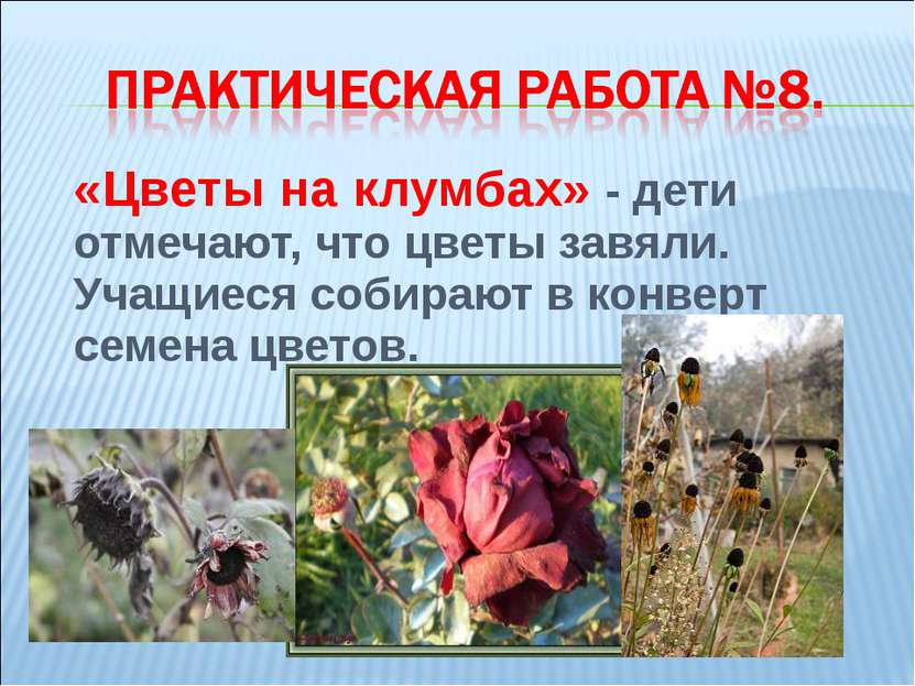 «Цветы на клумбах» - дети отмечают, что цветы завяли. Учащиеся собирают в кон...