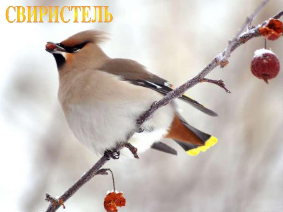 Лазарева Лидия Андреевна e-mail: lazareva@pdps.lv