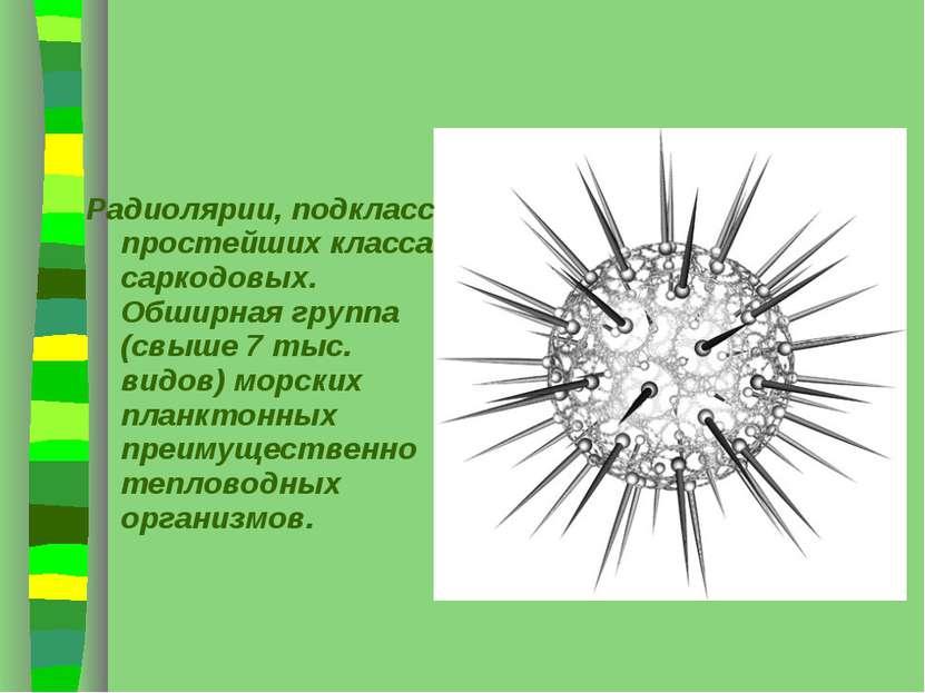 Радиолярии, подкласс простейших класса саркодовых. Обширная группа (свыше 7 т...