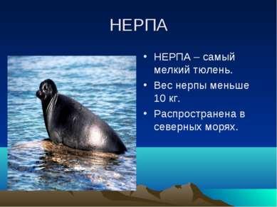 НЕРПА НЕРПА – самый мелкий тюлень. Вес нерпы меньше 10 кг. Распространена в с...