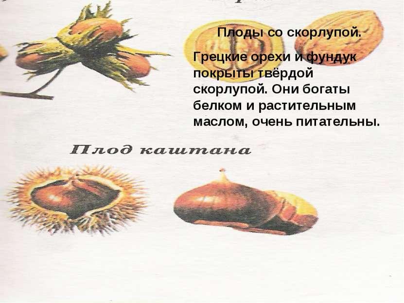 Плоды со скорлупой. Грецкие орехи и фундук покрыты твёрдой скорлупой. Они бог...