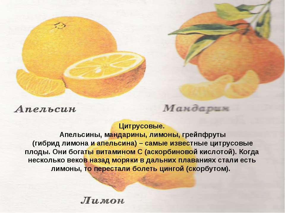 Цитрусовые. Апельсины, мандарины, лимоны, грейпфруты (гибрид лимона и апельси...