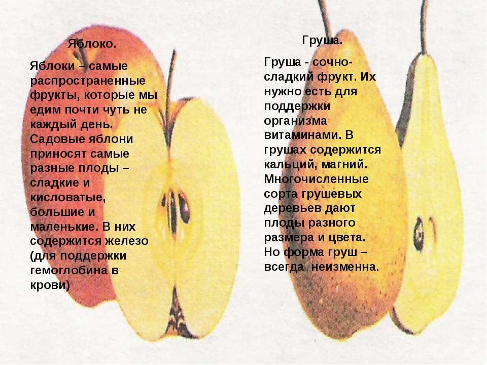 Яблоко. Яблоки – самые распространенные фрукты, которые мы едим почти чуть не...