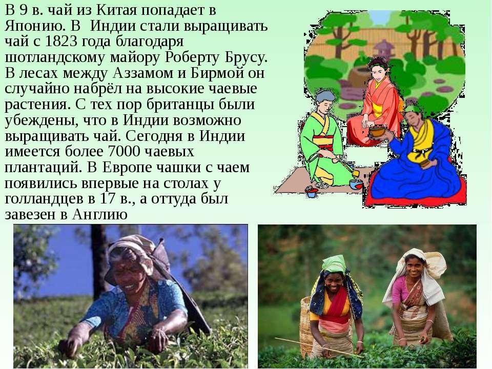 В Россию чай пришел из Азии, через Сибирь. Впервые чай привез русский диплома...