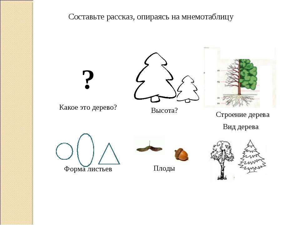 Составьте рассказ, опираясь на мнемотаблицу Строение дерева ? Какое это дерев...