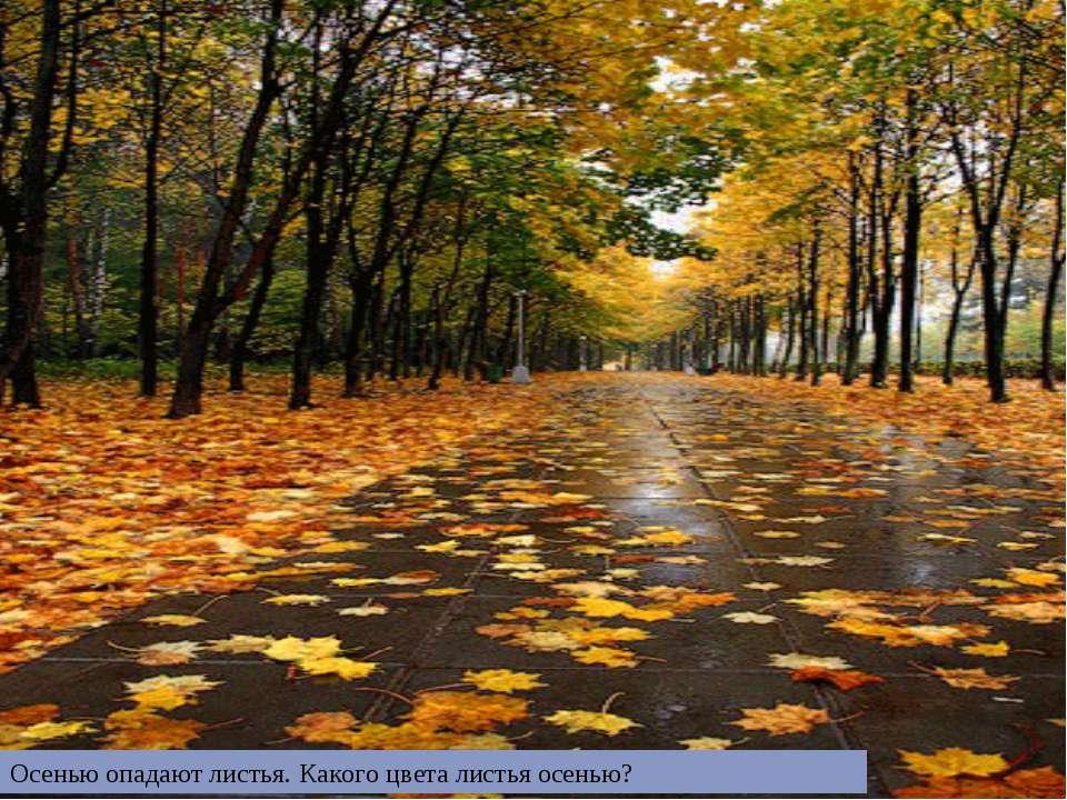 Осенью опадают листья. Какого цвета листья осенью?