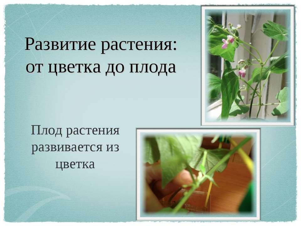 Развитие растения: от цветка до плода Плод растения развивается из цветка
