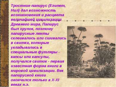 Тростник-папирус (Египет, Нил) дал возможность возникновения и расцвета велич...