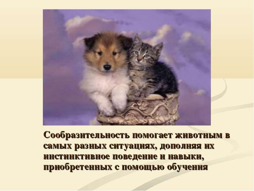 Сообразительность помогает животным в самых разных ситуациях, дополняя их инс...