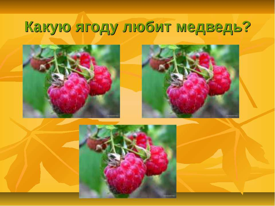 Какую ягоду любит медведь?