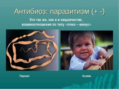 Антибиоз: паразитизм (+ -) Паразит Хозяин Это так же, как и в хищничестве, вз...