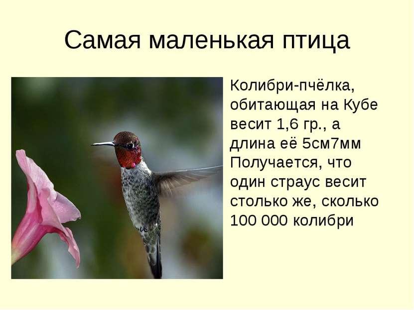 Самая маленькая птица Колибри-пчёлка, обитающая на Кубе весит 1,6 гр., а длин...