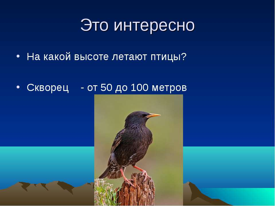 Это интересно На какой высоте летают птицы? Скворец - от 50 до 100 метров