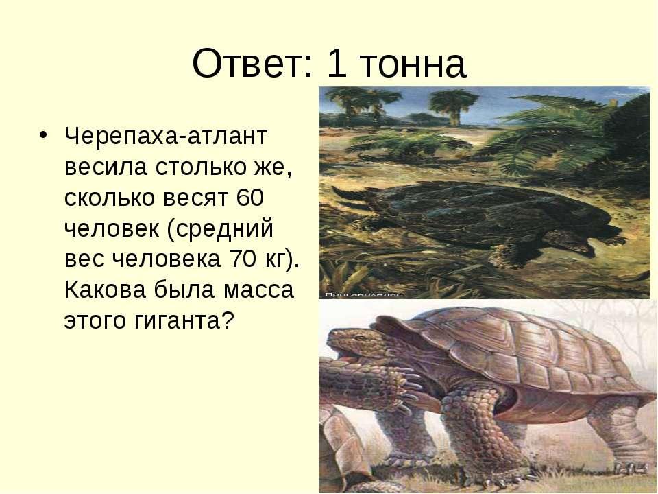 Ответ: 1 тонна Черепаха-атлант весила столько же, сколько весят 60 человек (с...