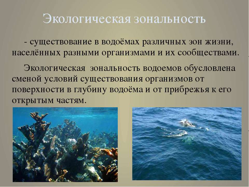 Экологическая зональность - существование в водоёмах различных зон жизни, нас...