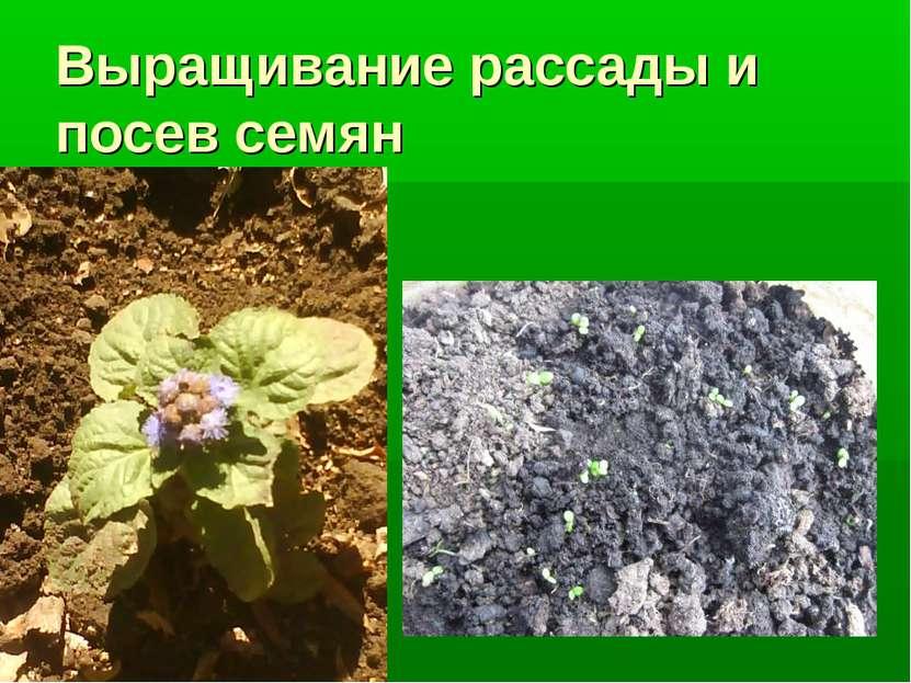 Выращивание рассады и посев семян