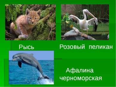 Рысь Розовый пеликан Афалина черноморская
