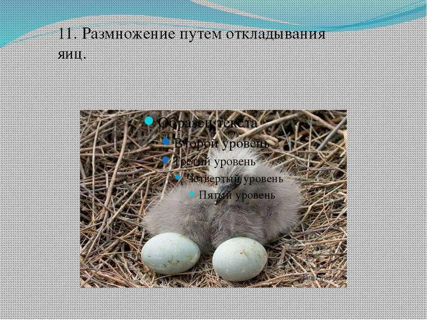 11. Размножение путем откладывания яиц.