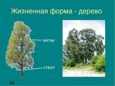 Жизненная форма - дерево