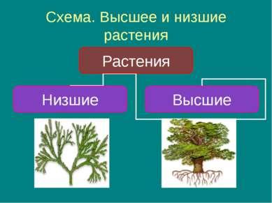 Схема. Высшее и низшие растения