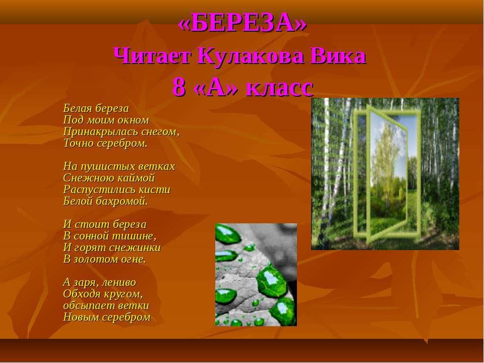 «БЕРЕЗА» Читает Кулакова Вика 8 «А» класс Белая береза Под моим окном Принакр...