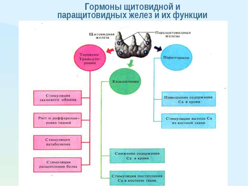 Гормоны щитовидной и паращитовидных желез и их функции