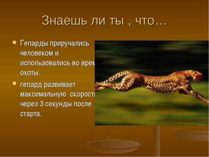 Знаешь ли ты , что… Гепарды приручались человеком и использовались во время о...
