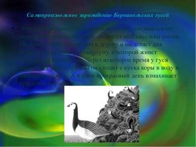 Самопроизвольное зарождение Бернакельских гусей Этот гусь вырастает на обломк...